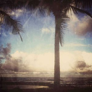 tranquil palm tree overlooking the ocean
