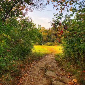 dirt path leading to an open meadow