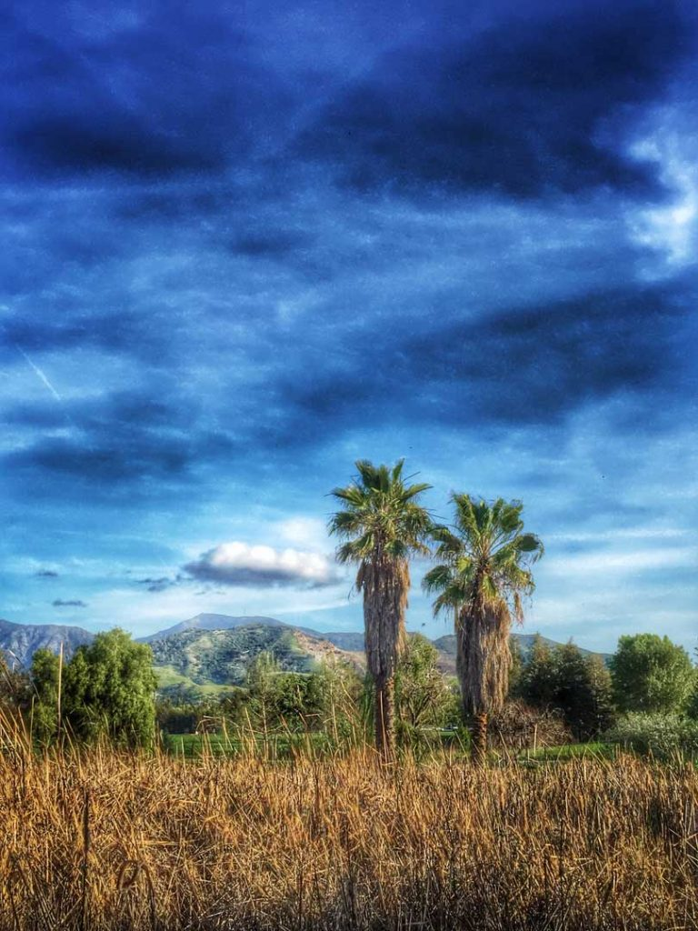 two palm trees overlooking mountains